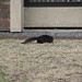 BlackSquirrel 2012-03-15 at 10-36-44