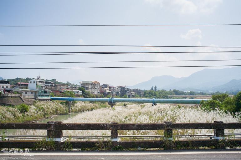 北寮橋下芒草  (8)
