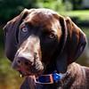 No offense Monday, but I don't like you!  #mondayblues #goawaymonday #isitfridayyet #hooch #windyspotshomemadehooch #gsp #germanpointer #germanshorthairedpointer #pointer #birddog #gundog #puppy #puppygram #puppiesofinstagram #cute #adorable #cutestpuppye