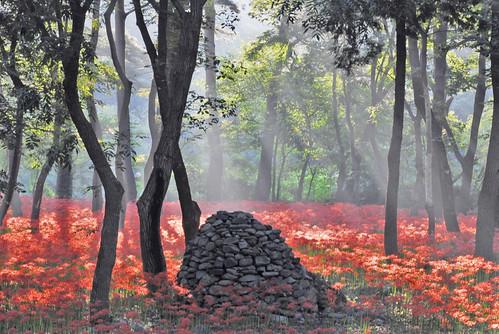 fall nature stone forest garden landscape flora nikon korea seoul wildflowers redspiderlily