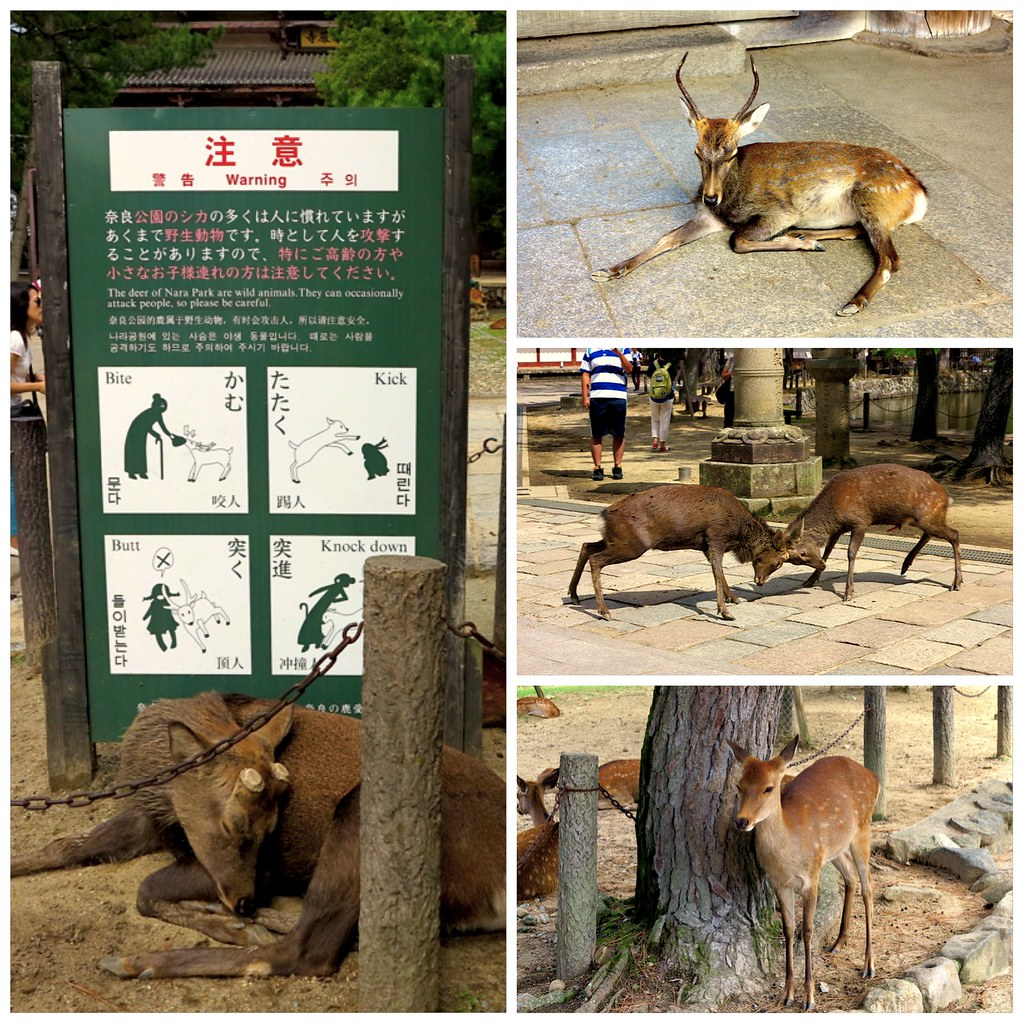 Cuidado ciervos Nara