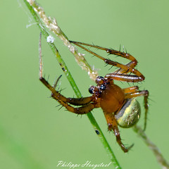 ? name ? spider 20140927_45614