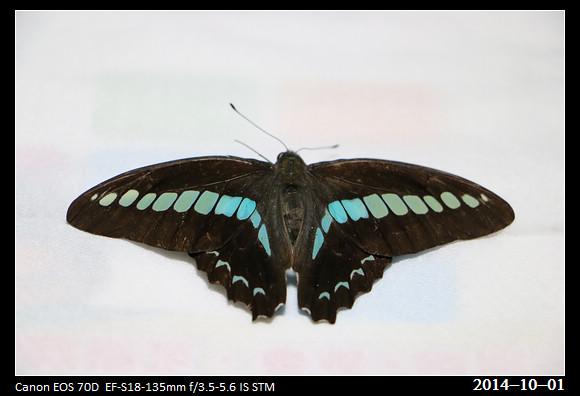 20141001_Butterfly1