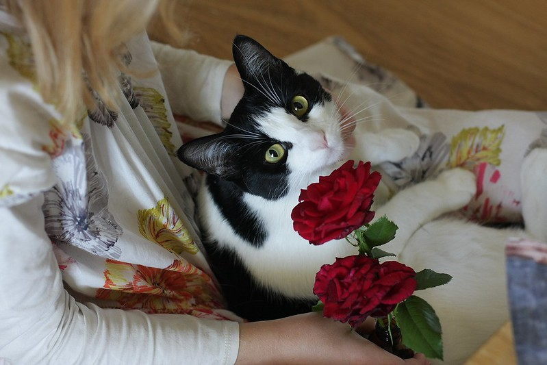 Simpkin smelling the roses for the feast of St. Therese