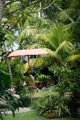 Bali vibe
