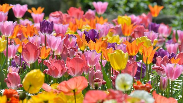 COLORS 春の色