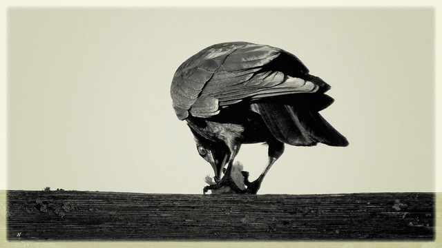 a crow's suppertime