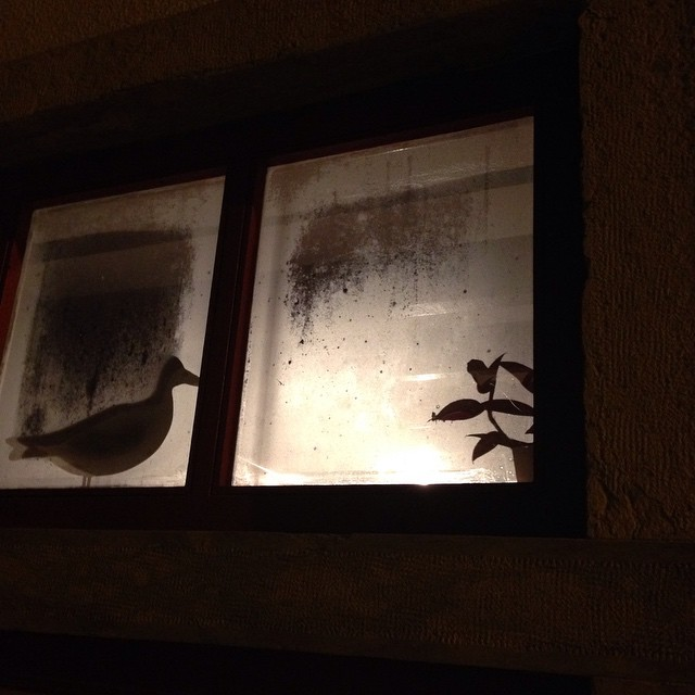 Foggy seagull shilhoute @ericeira #window #windows #justframeit