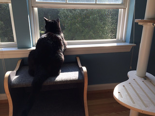 Sam enjoys an open window!
