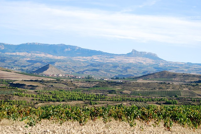 Campo Viejo's Vineyard