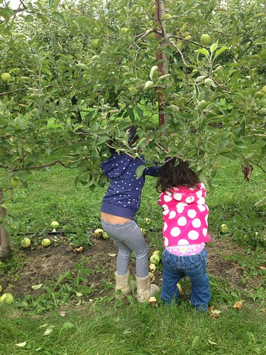 Apple picking Jonomac Orchard
