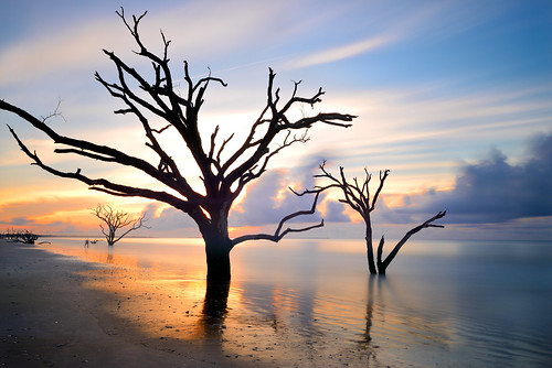 ocean longexposure trees light color beach clouds sunrise nikon southcarolina charleston botanybay atlanticocean edistoisland eastcost acebasin davidshield