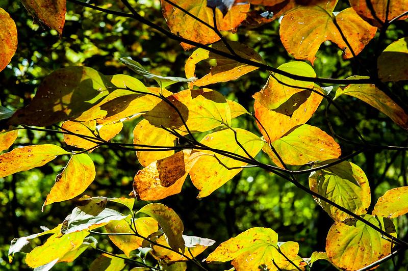 Minton Nature Preserve