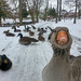 Goose Photobomb by Eric Reed by AccessDNR