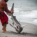 Bull Shark Encounter, Dania Beach Florida.