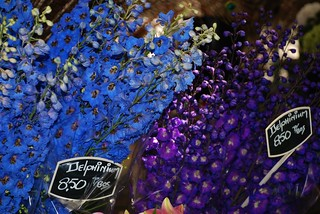 Delphiniums on Market Stall, Saturday Market in Jordaan area on the Lindengracht, Amsterdam, Holland