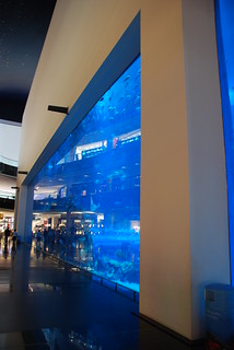 Dubai Mall Aquarium, Dubai Mall, Dubai