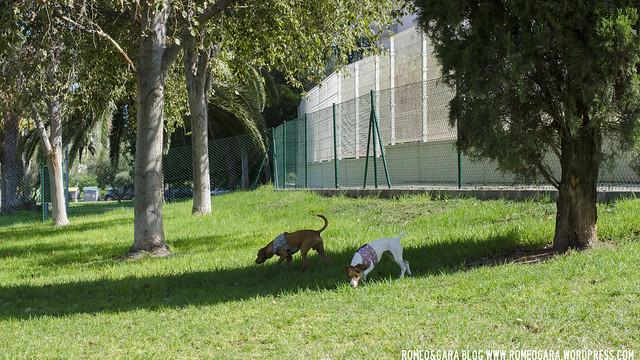 Parque Canino de El Campello