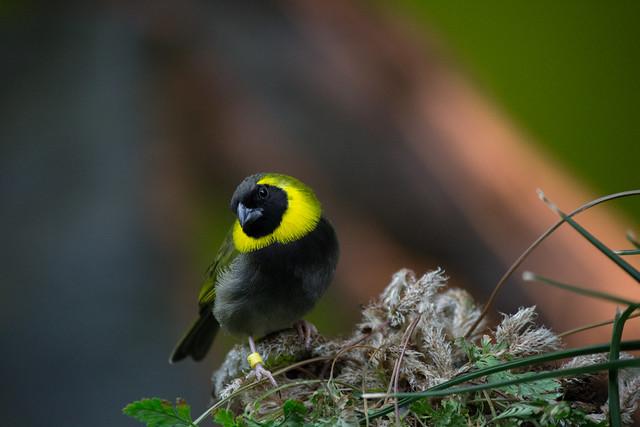 A Curious Bird