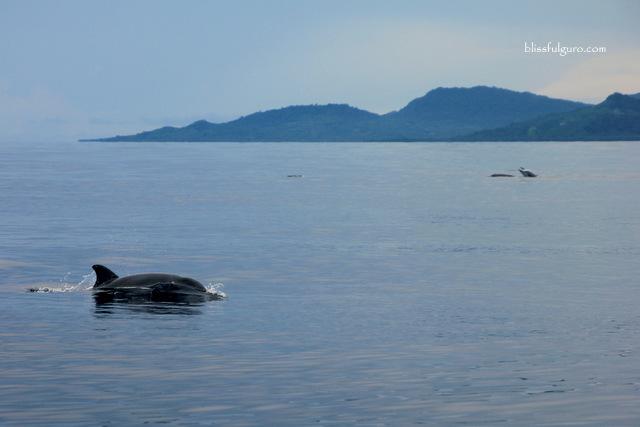 Balabac Palawan Dolphins