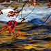 oxtongue rapids by beesquare