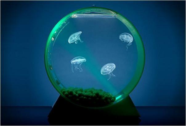 mesita con pecera : 13 pecera colgante br br 14 pecera para medusas br