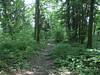 Bois des Machurettes @ Hike to Montagne de la Mandallaz