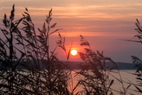 morning sky plants nature clouds sunrise landscape russia lakes sigma 1020mm ladoga canon50d