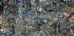 Mur de vélo sur la Cycloroute Bellechasse