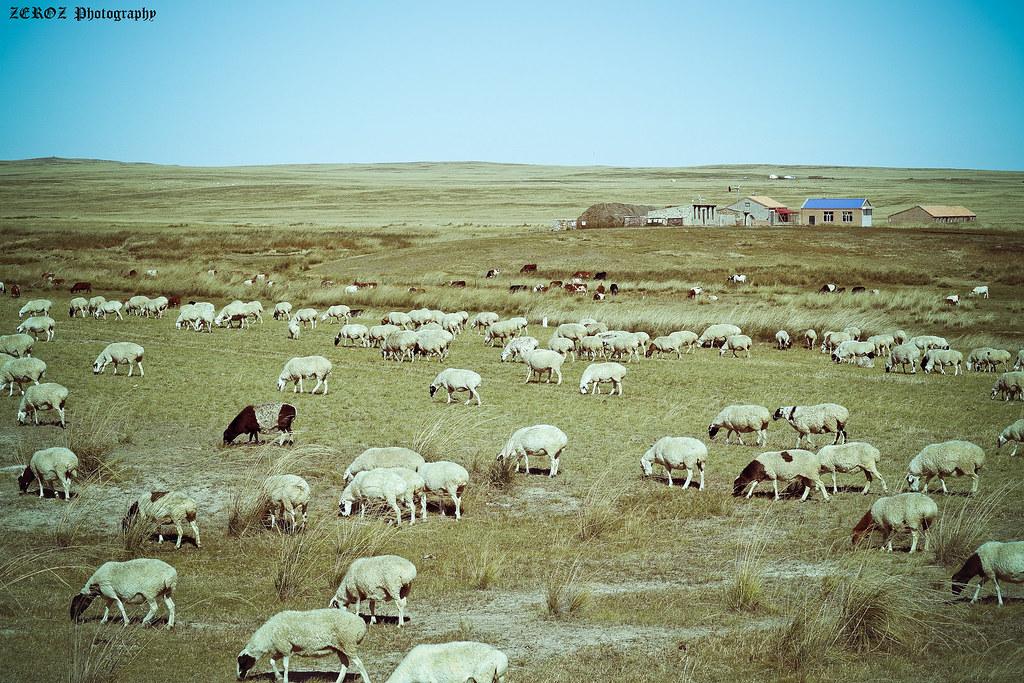 內蒙古‧印象1881-60-2.jpg
