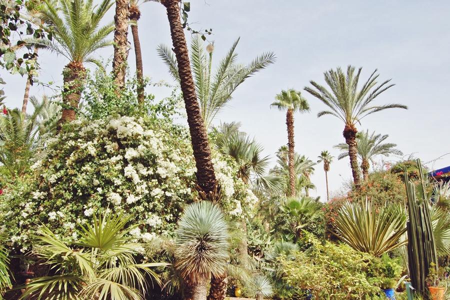 Jardin Majorelle (3)
