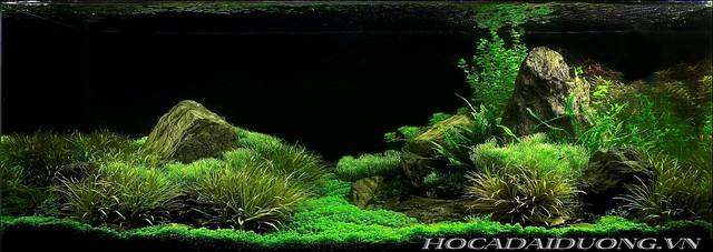 phông 3d hồ cá đại dương phong dd-03