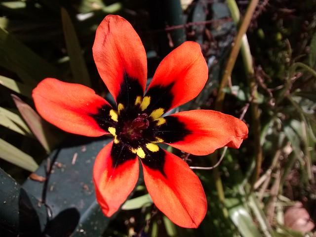Wild flower bowral