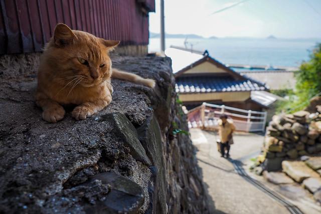 Island Cat #24