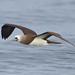 Finatic 's iNaturalist Stream has added a photo to the pool:San Diego County, California, USeBirdebird.org/ebird/view/checklist?subID=S19904315