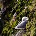 seagull on cliff...