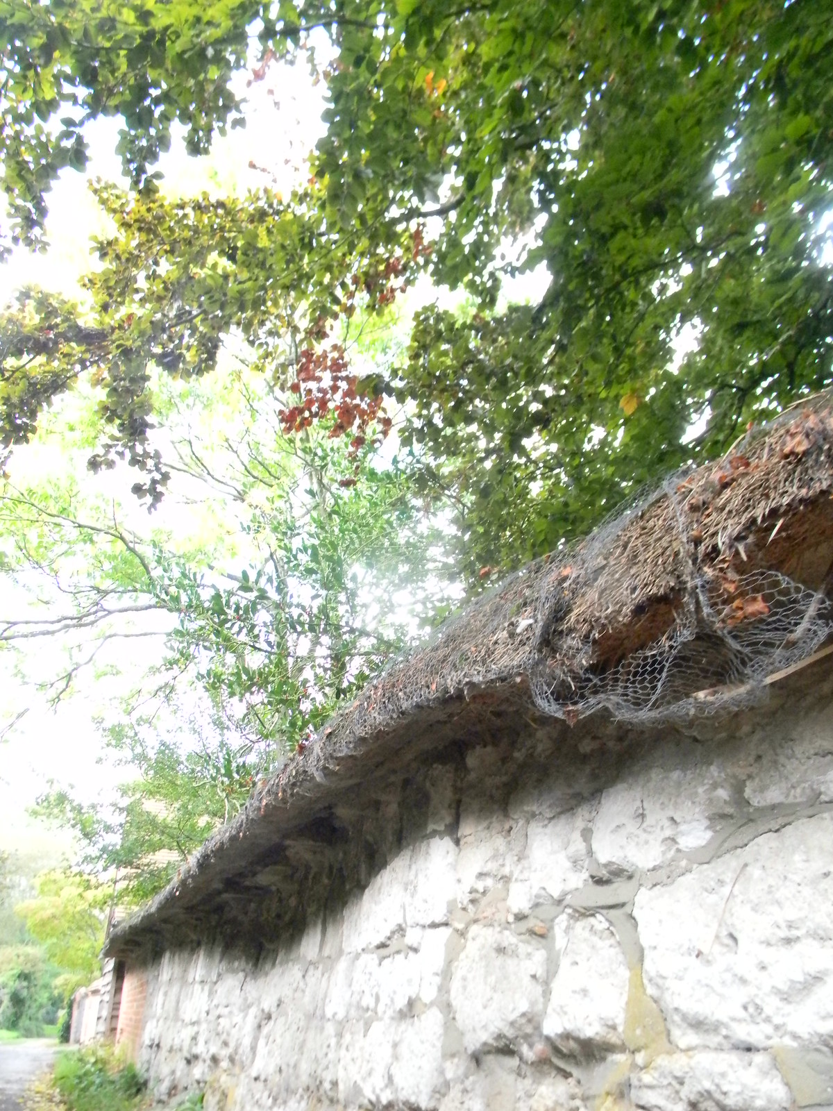 Thatched wall, Blewbury Cholsey to Goring