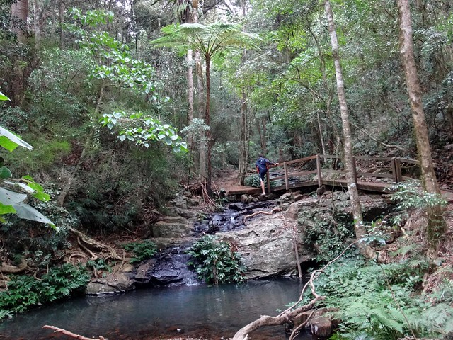 Bunya Mountains Sceninc Walk