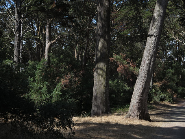 Golden Gate Park, San Francisco (2014)