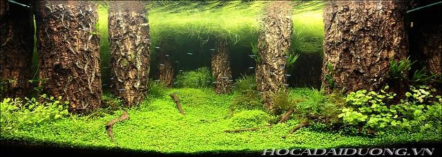 phông 3d hồ cá đại dương phong dd-09