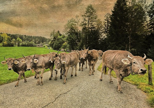 texture photoshop painting switzerland cow nikon cows manipulation september photoart hdr kühe 2014 urnäsch d700