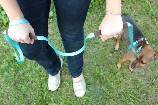 walk-in-sync-dog-walking-training-system
