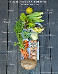 Fall CSA,  Week 1,  Cream of the Crop  . . .  labe…