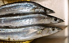 herring(0.0), mackerel(0.0), cod(0.0), japanese amberjack(0.0), bonito(0.0), barramundi(0.0), sardine(0.0), milkfish(0.0), animal(1.0), fish(1.0), fish(1.0), pacific saury(1.0), sauries(1.0), forage fish(1.0), capelin(1.0),