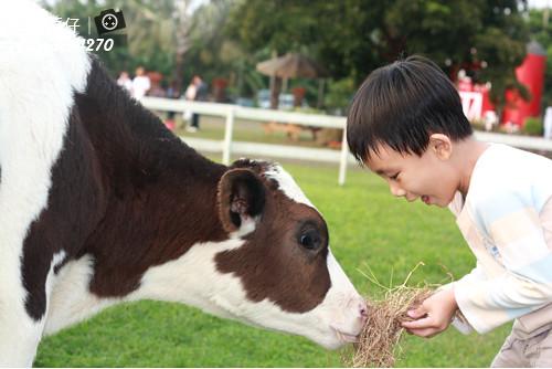 台南小吃綠盈牧場86