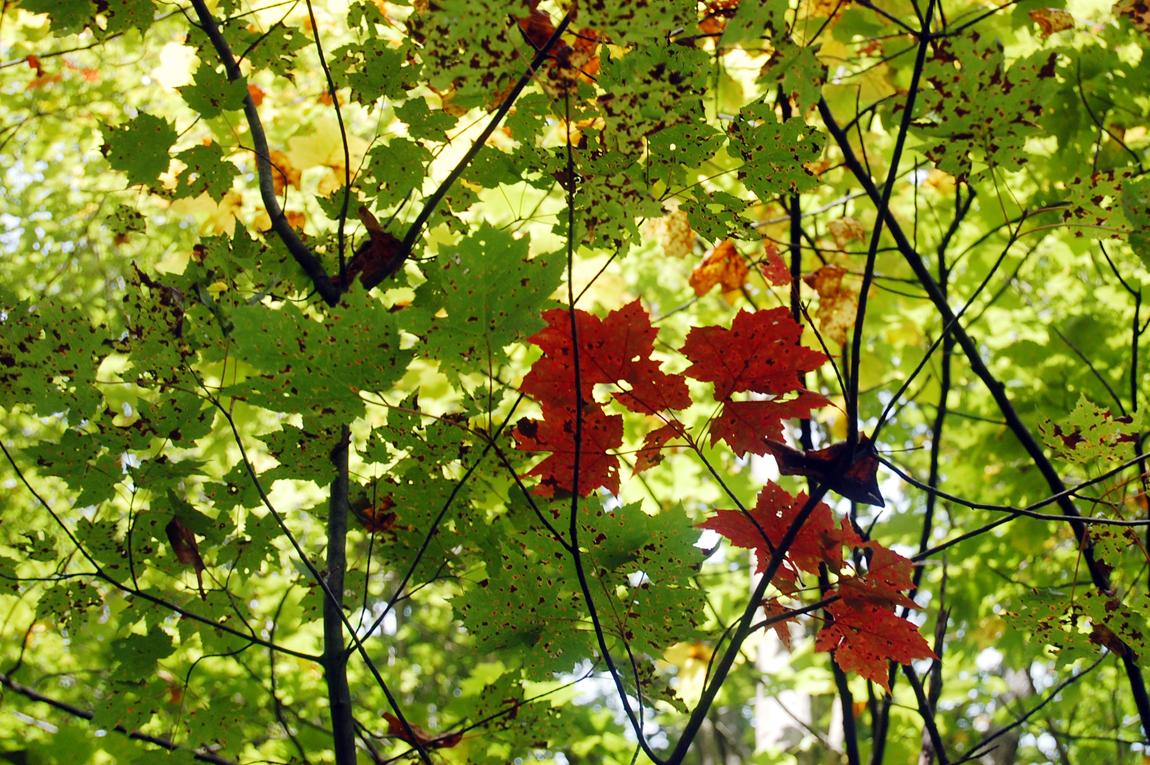 FoliageBegins@Ohiopyle