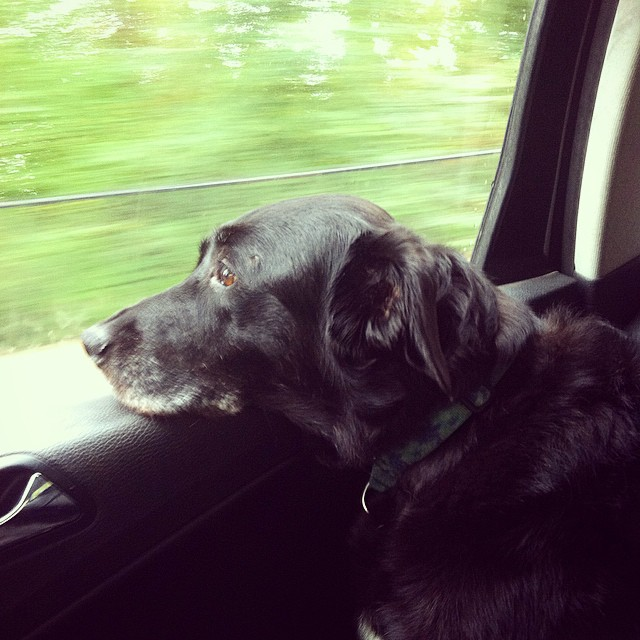 Traveling Maggie.