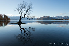 Wanaka Lake Tree