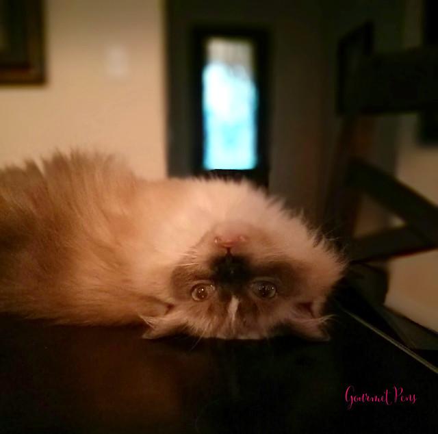 Caturday: Tyco Halloween Cat