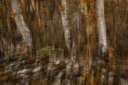 wood trees tree nature canon bomen rocks natuur romantic bos pyrénéesorientales canoneos5dmarkii